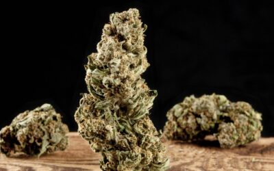 Concia della cannabis: la differenza tra mediocre ed eccellente